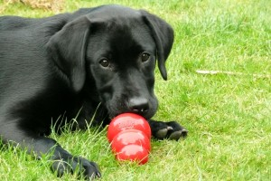 Archie and his kong